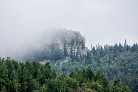 Low clouds in a mountain forest Фото со стока