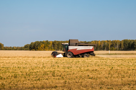 Combine harvests grain crops