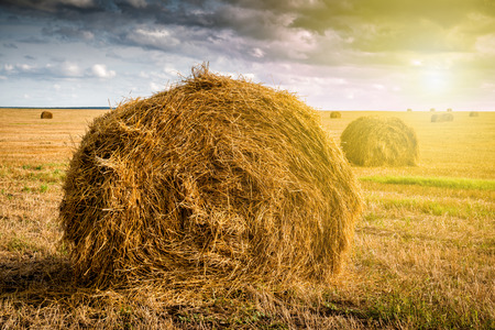 Twisted haystack on agriculture field landscape