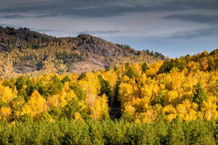 Golden colors of an autumn forest in the mountains on a cloudy day