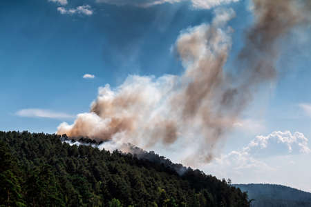 Forest fire. Smoke on conifers