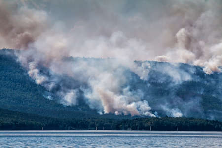 Forest fire near the lake