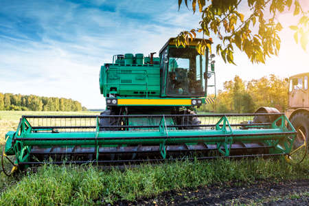 The modern green combine harvester on agricultural field in the rays of the autumn sun 版權商用圖片