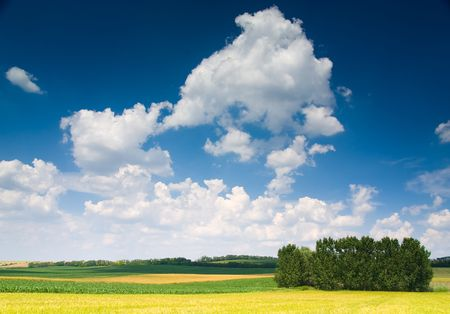 outfield: Field, trees and blue cloudy sky (ideal for background or wallpaper)
