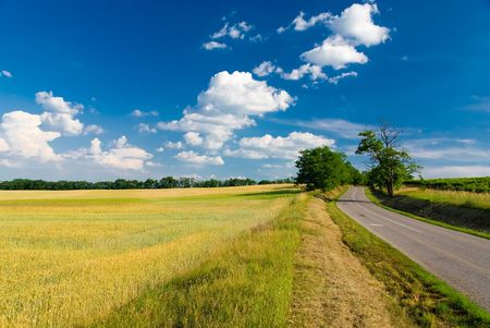 outfield: Landscape - road, field, trees and blue cloudy sky (ideal for background or wallpaper)