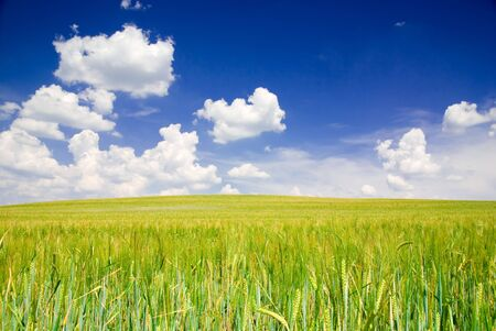Landscape with field and blue cloudy sky (ideal for background or wallpaper) photo