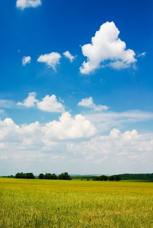 Field, trees and blue cloudy sky (ideal for background or wallpaper) photo
