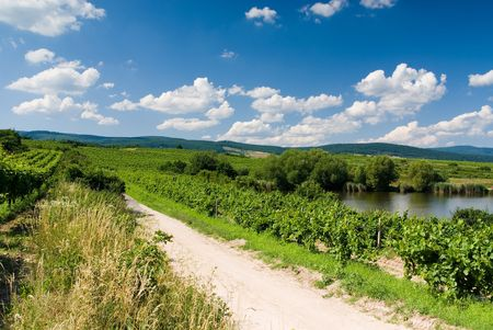 Landscape - road, vineyard, trees, lake and blue cloudy sky Stock Photo - 1289671
