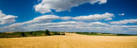 Landscape BIG panorama - field, trees and blue cloudy sky (ideal for background or wallpaper) photo