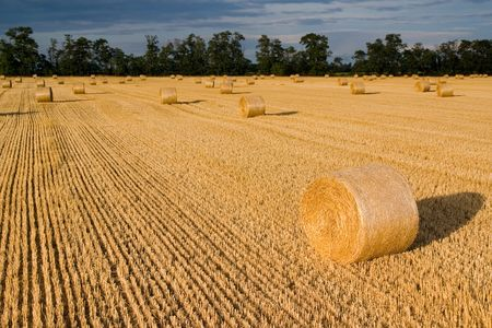 Straw bales on farmland with blue cloudy sky Stock Photo - 1747641