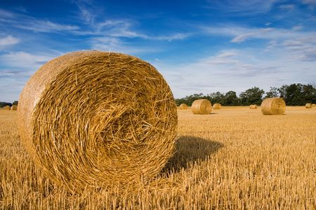 Straw bales on farmland with blue cloudy sky Stock Photo - 2652334