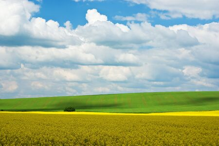 Rape field with blue sky (ideal for background) photo