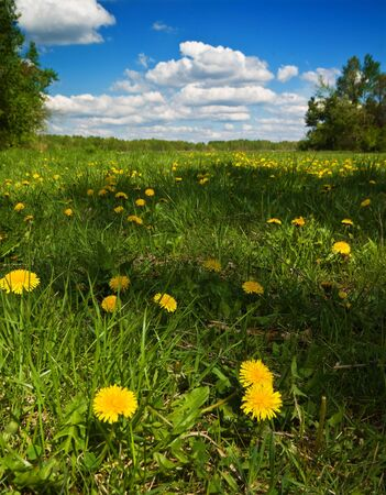 Beautiful field with dandelions and the cloudy sky Stock Photo - 4637135