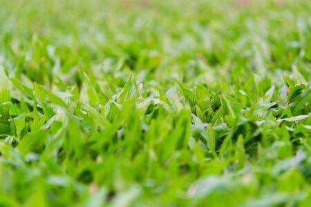 green ridge: Soft focus, fresh green grass, warm sun light on the meadow