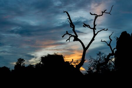 scare: Silhouettes of scare Tree with sunset background, Concept for Halloween tree Stock Photo