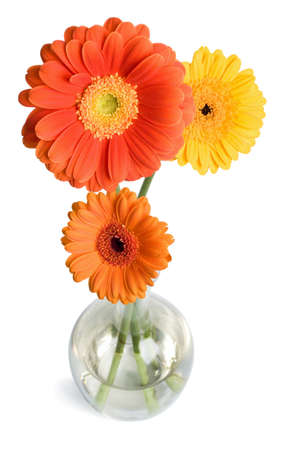 daisies in vase isolated photo