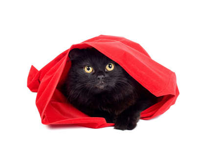 cute black cat hiding in a red bag isolated on white photo