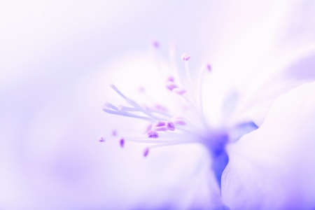 macro of blue flower Stock Photo - 4501255