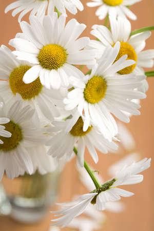 bouquet of beautiful camomiles Stock Photo - 4502021