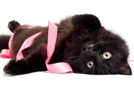 gato jugando: gato negro jugando con la cinta rosa Foto de archivo