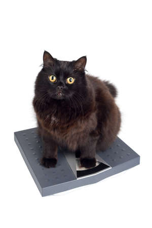 cats weight
