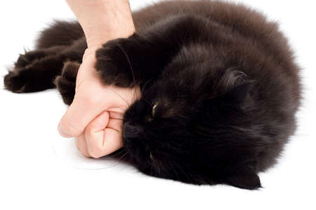 black angry cat biting mans hand