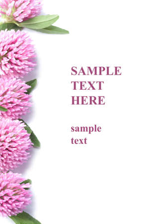 frame of pink clover flowers isolated with copyspace photo