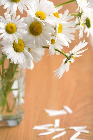 bouquet of beautiful camomiles Stock Photo - 4548133