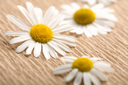 camomile flowers over recycled paper. ecological background Stock Photo - 4559272