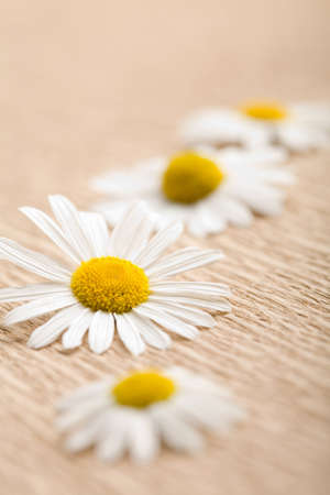 camomile flower over recycled paper. ecological background Stock Photo - 4547967