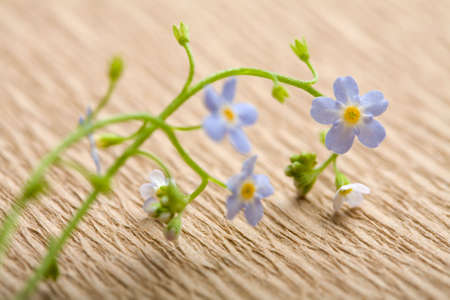 forget me not flower over recycled paper. ecological background Stock Photo - 4586645