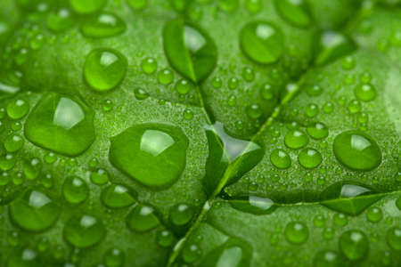 leaf with water drops photo
