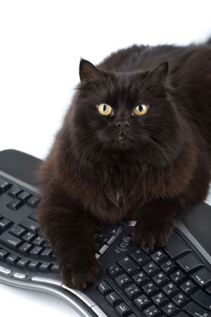 cute black cat over keyboard isolated photo