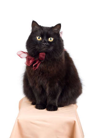 funny black cat wearing red bow isolated Stock Photo - 4590960