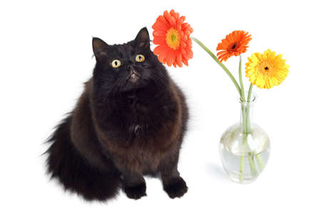 black cat and flowers Stock Photo - 4590903