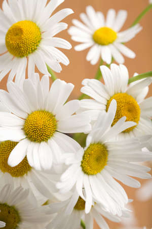 bouquet of beautiful camomiles Stock Photo - 4599483