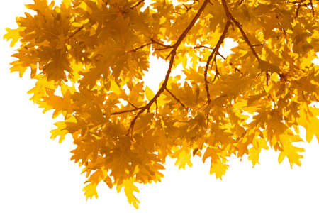 frame of autumn leaves isolated photo