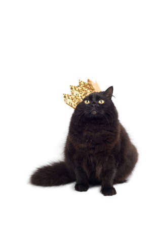 imperious: cat king Stock Photo