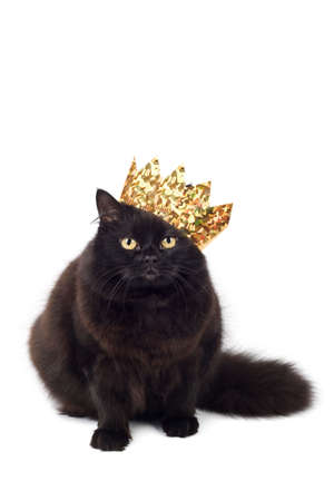 king crown: black cat wearing golden crown isolated