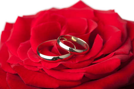 Golden wedding rings over red rose isolated photo
