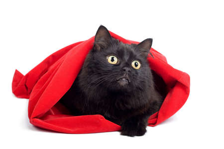 black cat in red bag isolated photo