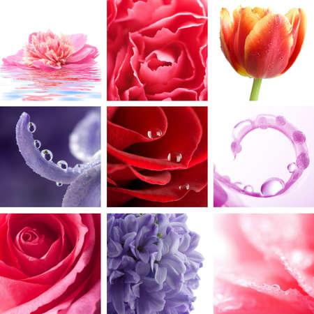 beatiful flowers collage of nine photos photo
