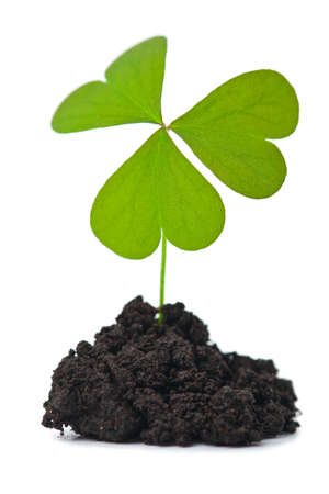 green plant in dark soil isolated photo