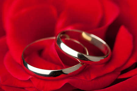 Golden wedding rings over red rose photo