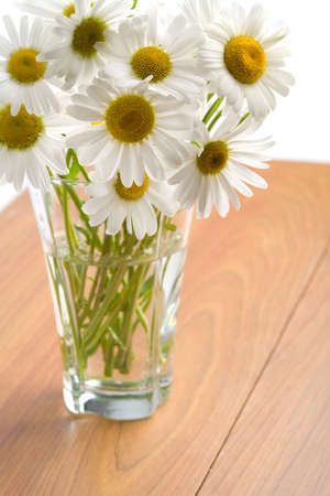 bouquet of beautiful camomiles isolated Stock Photo - 5053629