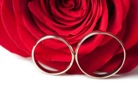 Gold wedding rings and red rose isolated photo