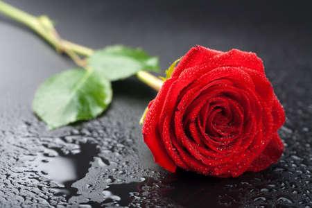 美しいレッドローズ水滴を持つ黒の背景上