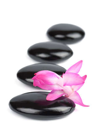 spa stones and pink flower isolated photo