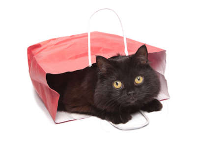 hairy adorable: black cat in red bag isolated