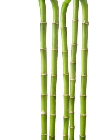 bamboo background isolated Stock Photo - 6035537